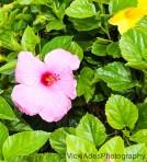 Vicki Ades Photography Flower
